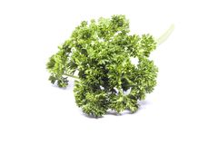 Parsley leaves to be food ingredients. Parsley leaves is to be food ingredients. For good aroma in food Stock Photography