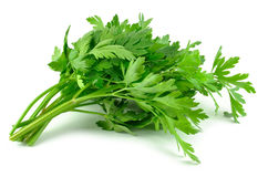 Parsley leaves Stock Images