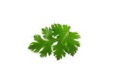 Parsley leaves on white background. Parsley green leaves on white Stock Image