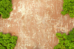 Parsley leaves on wooden background. Fresh green parsley leaves close up with copyspace Royalty Free Stock Images