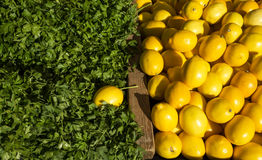Parsley and lemons Stock Photography