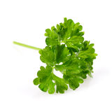 Parsley Macro Stock Photo