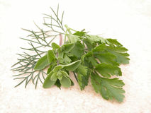 Parsley marjoram and dill stock image