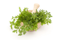 Parsley in mortar Royalty Free Stock Image