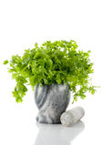 Parsley in a mortar Stock Image