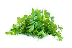 parsley några Arkivbild