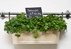 Parsley in a nice patchwork Stock Photo