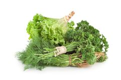 Parsley and other green Royalty Free Stock Photography