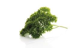Parsley Petroselinum crispum, close-up Royalty Free Stock Photography