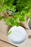 Parsley plant Royalty Free Stock Image
