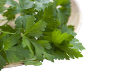Parsley in plate. isolated on white. Stock Images