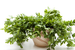 Parsley in the pot Royalty Free Stock Photography