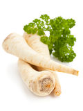 Parsley root Royalty Free Stock Image