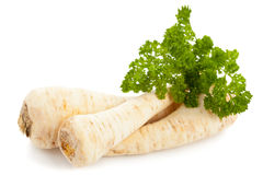 Parsley root Royalty Free Stock Photos