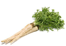 Parsley with root Stock Photography