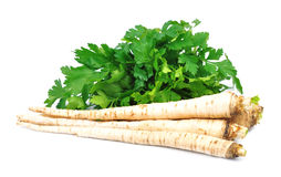 Parsley root with parsley Stock Images