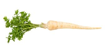 Parsley root. Path isolated on white royalty free stock photos