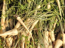 Parsley root Stock Photos