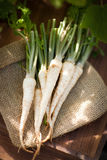 Parsley roots. Fresh parsley roots on a jute back Royalty Free Stock Photography