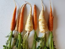 Parsley roots and carrots fresh vegetables isolated, white background, orange yellow green color. leaf, healthy diet. Natural Royalty Free Stock Photo