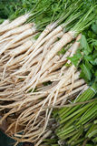 Parsley roots Stock Images