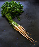 Parsley roots Royalty Free Stock Image