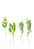 Parsley, Rosemary, Sage and Thyme Herbs. Herb leaf sprigs of parsley, sage, rosemary and thyme with reflection over white background royalty free stock photos