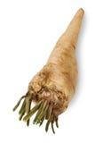 parsley rotar Royaltyfria Bilder