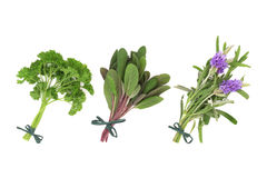 Parsley, Sage and Lavender Herbs Royalty Free Stock Photo