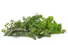 Parsley Sage Rosemary and Thyme Herbs Royalty Free Stock Photo