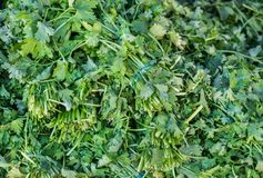 Parsley for sale at local farmers market. Parsley for sale at local city farmers market stock photography