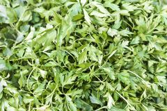 Parsley for sale at marketplace Stock Images