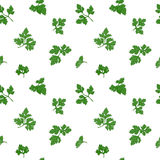 Parsley seamless pattern Royalty Free Stock Images