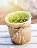 Parsley seedlings. In a pot on a table in an urban garden Stock Images