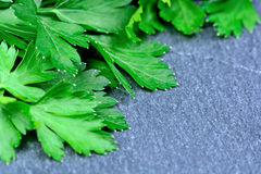Parsley on slate closeup Royalty Free Stock Images