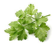 Parsley spice Stock Photo