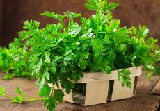 Delicious Parsley sprigs in a brown wicker basket and wooden board. Garden parsley herbs. Organic effective source of anti-oxidant. Parsley sprigs in a brown stock image