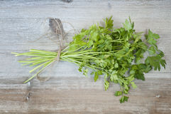 Parsley and string Royalty Free Stock Images