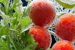 Parsley and tomato in bubbles Stock Photography