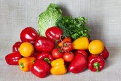 Parsley, tomato, paprika, Beijing cabbage, fenne, orange on a canvas Stock Images