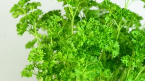 Parsley on a turn table stock video footage