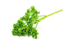 Parsley twig Stock Photo