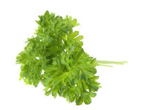 Parsley twig Royalty Free Stock Photos