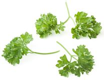 Parsley twigs Stock Images