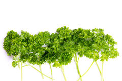 Parsley twigs against white Royalty Free Stock Image