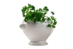 Parsley in a vase Stock Images