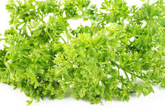 Parsley vegetable Royalty Free Stock Image