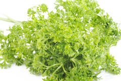 Parsley vegetable Royalty Free Stock Photography