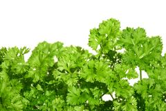 Parsley on white. Stock Photo
