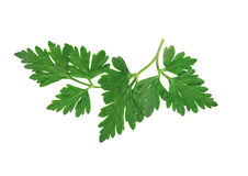 Parsley On White Royalty Free Stock Photo